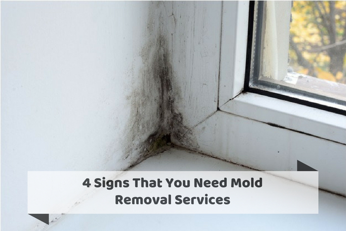 4 Signs That You Need Mold Removal Services