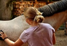 Pet Horse Training – You Know Some Points