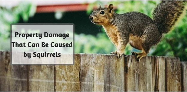 Property Damage That Can Be Caused by Squirrels