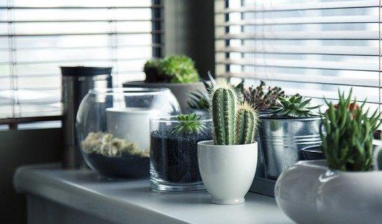Best Succulents for your garden