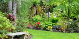 Tips for Newbies - How to Make the Most of Your Garden