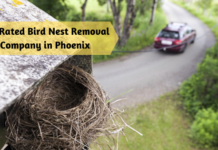 Top Rated Bird Nest Removal Company in Phoenix