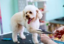 5 Reasons Why You Need To Hire A Dog Grooming Professional