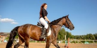Finding The Right Online Equestrian Clothing And Boot Brands To Suit Your Style