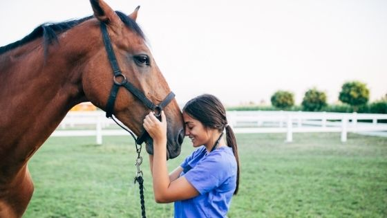 Stages of Laminitis Attacking Horses
