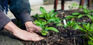 Demeter's Garden: 7 Timely Vegetables for the Autumn Season