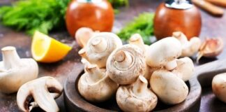 Top 5 Supplies to Cultivate Tasty & Healthy Mushrooms