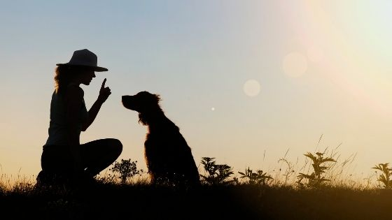 4 Surprising Ways Dogs can Strike you with Inspiration