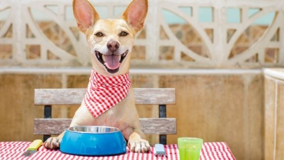 4 Reasons Why is Grain-Free Dog Food Better For Your Furry Friend