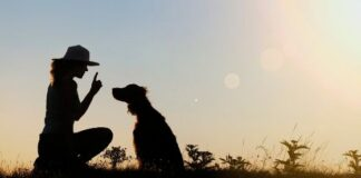 Key Reasons Why Training Your Dog is a Must