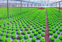 No Soil, No Problem - 7 Crops You Can Easily Grow Using Hydroponics